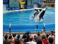 Logo tour SeaWorld San Diego
