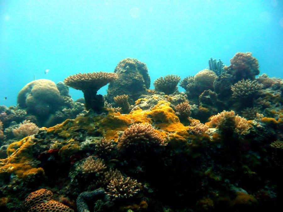 El segundo arrecife de coral más grande del mundo pasa frente a Playa del Carmen