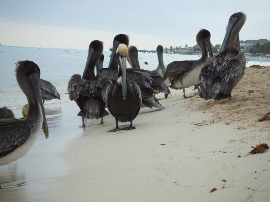 Playa del Carmen es un paraíso natural en la Riviera Maya
