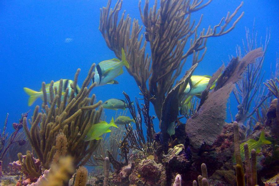 Playa del Carmen es ideal para practicar snorkel y buceo