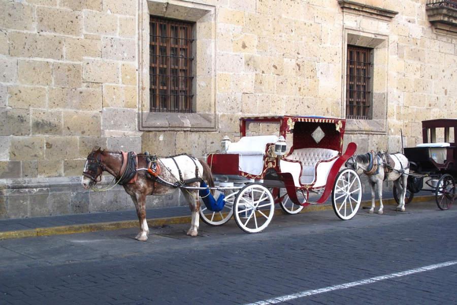 Tradicional calandria en el centro histórico de Guadalajara