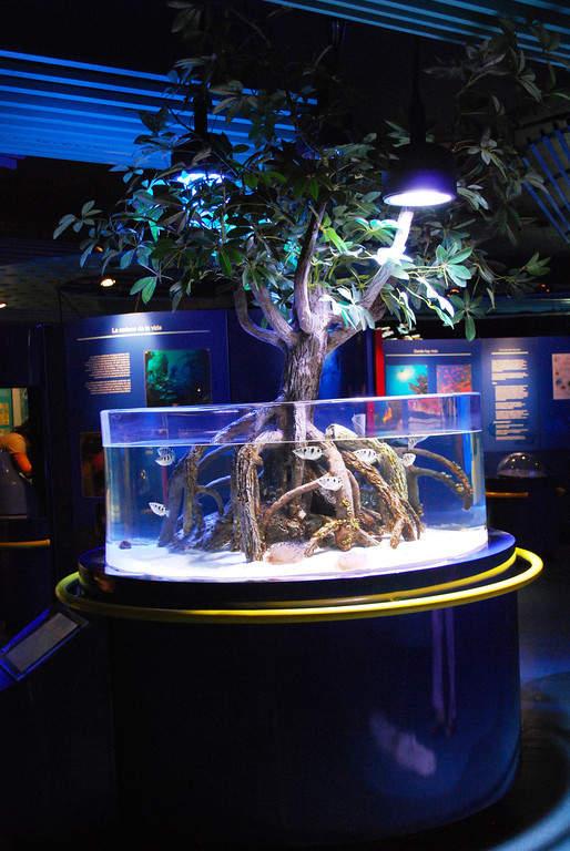 El Acuario de Veracruz exhibe diferentes especies marinas