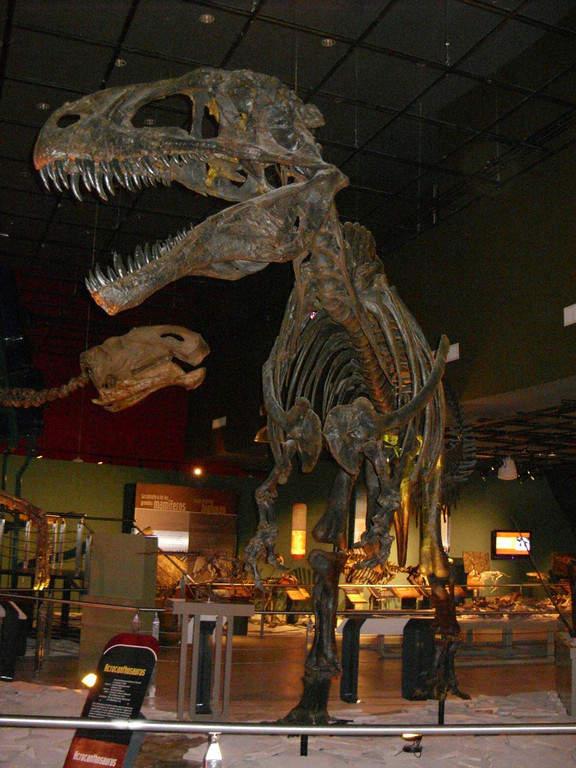 Interior del Museo de Historia Natural en Nuevo Laredo
