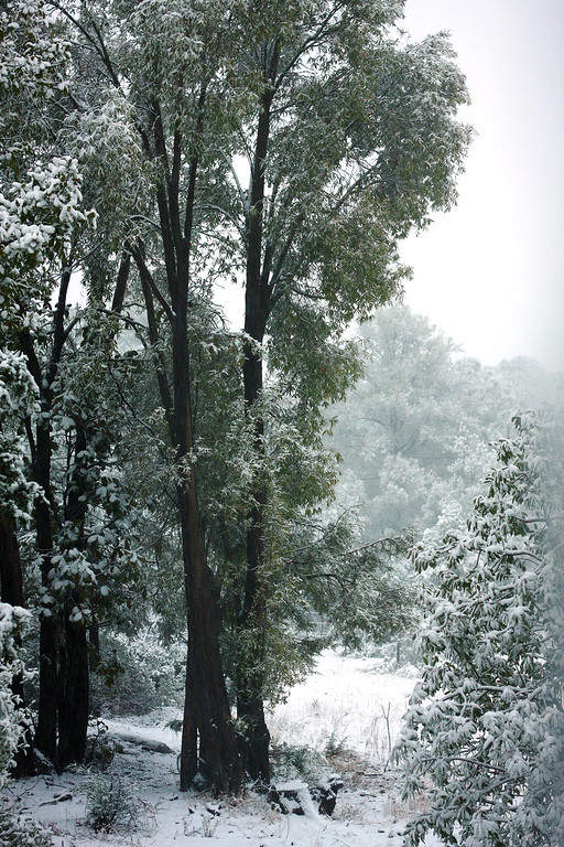 Paisaje invernal en la sierra donde está Cerocahui