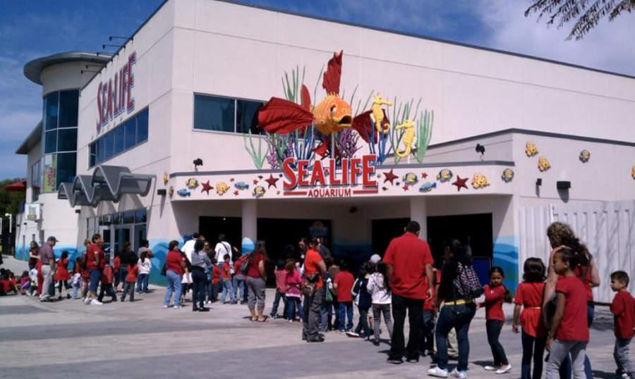 Visita el Acuario SEA LIFE en Carlsbad