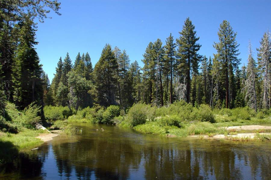 Disfruta de la belleza natural en el Parque Estatal Sugar Pine Point