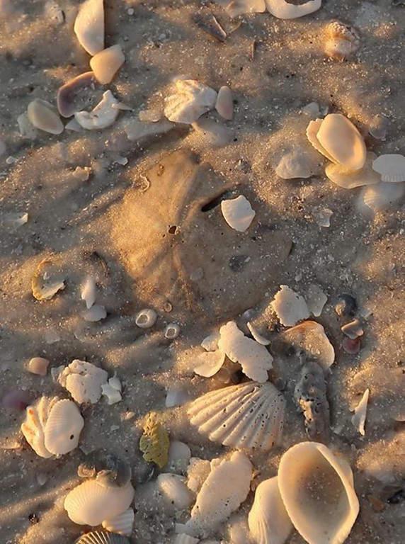 En la zona de las Diez Mil Islas abundan las conchas marinas