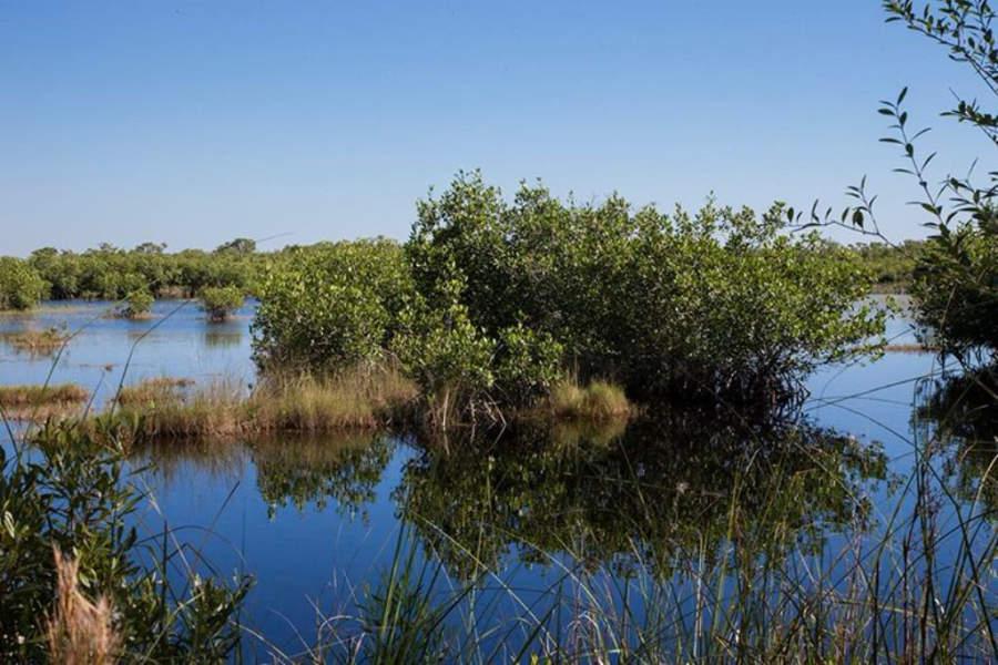 Reserva Nacional de la Bahía Rookery, Marco Island