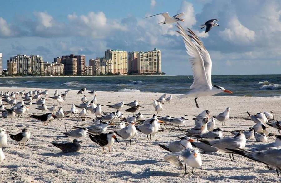 En Marco Island hay hoteles a la orilla del mar