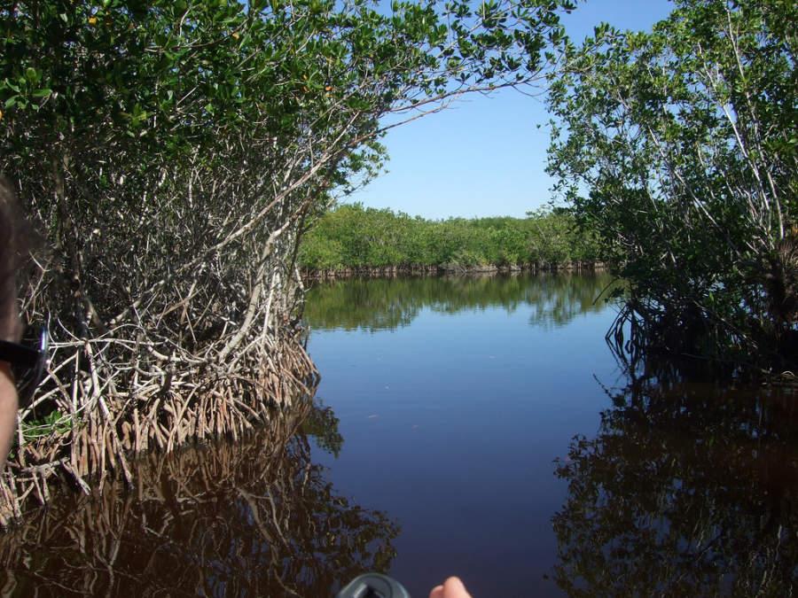 Zona de manglares en Marco Island