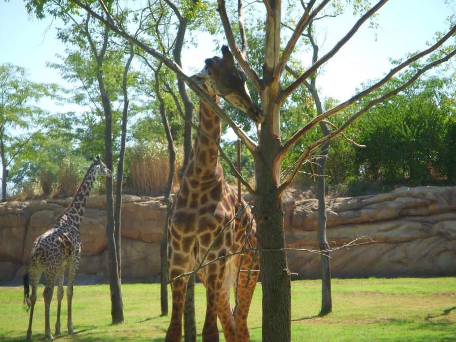 Vive una experiencia increible en el Zoológico de Nashville