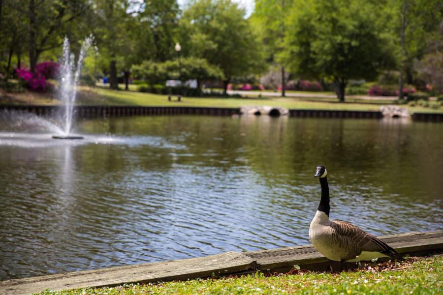 Estanque de patos en el lago Quarterman en North Charleston