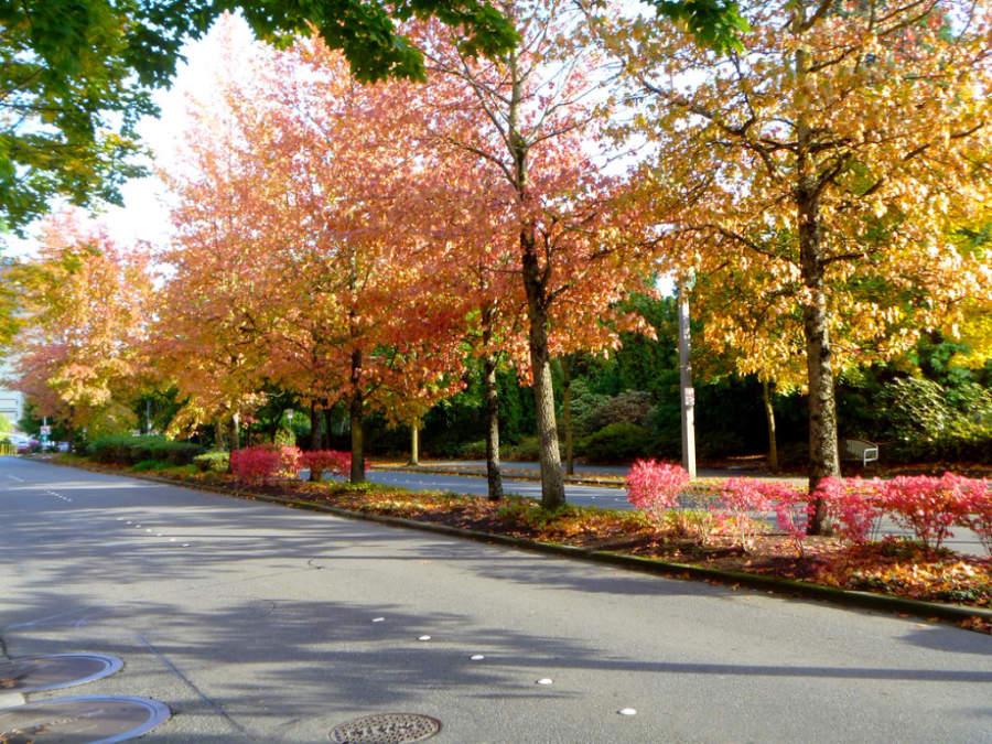 Avenida en la ciudad de Bellevue, Washington