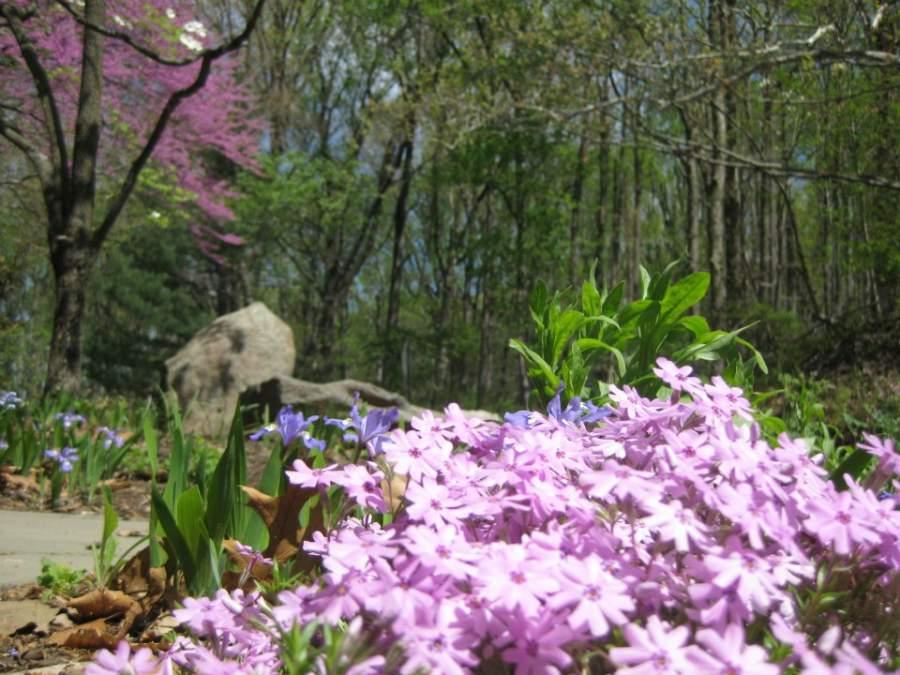 En el Centro Natural Flat Rock Brook puedes contemplar la belleza natural de Englewood