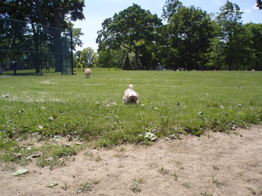 Parque para perros Schiller