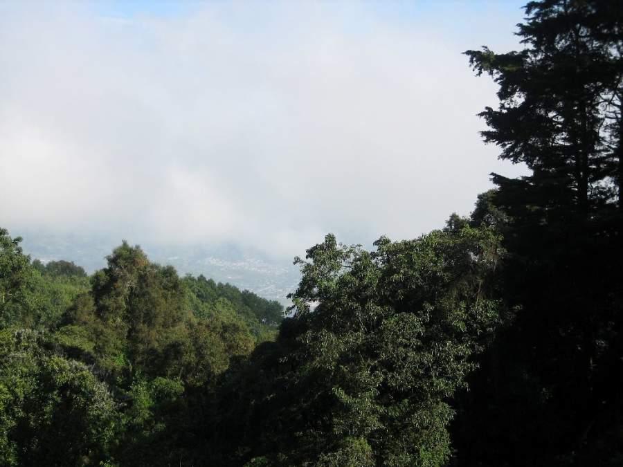 Paisaje boscoso en San Pedro Las Huertas