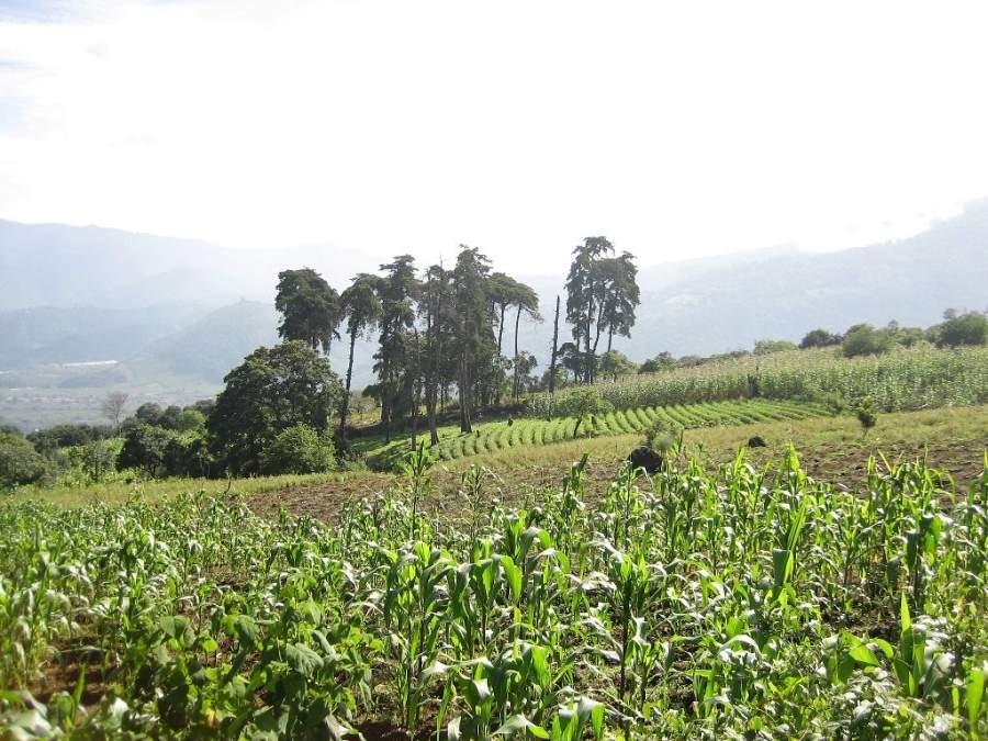 La principal actividad económica en San Pedro Las Huertas es la agricultura