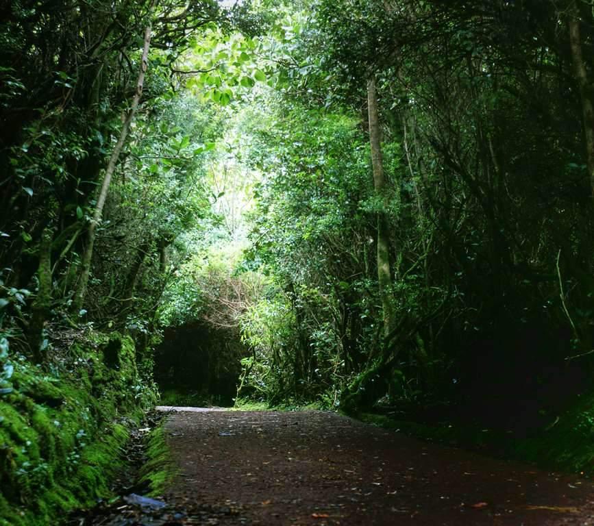 Poasito es una pequeña comunidad ideal para conocer el Parque Nacional Volcán Poás