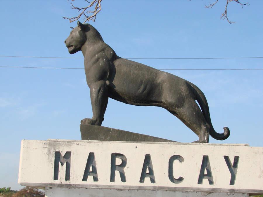 Estatua de un maracay, símbolo de la ciudad de Maracay