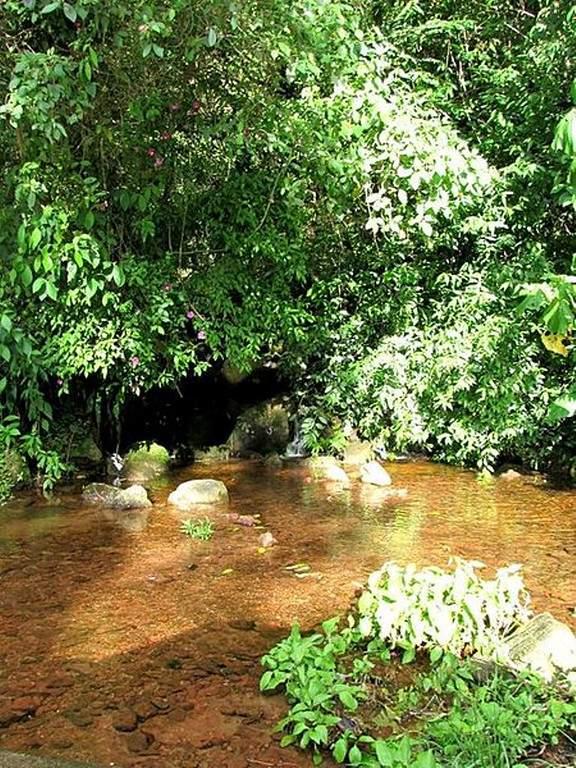 Parque Nacional Chorro El Indio, pulmón natural de San Cristóbal