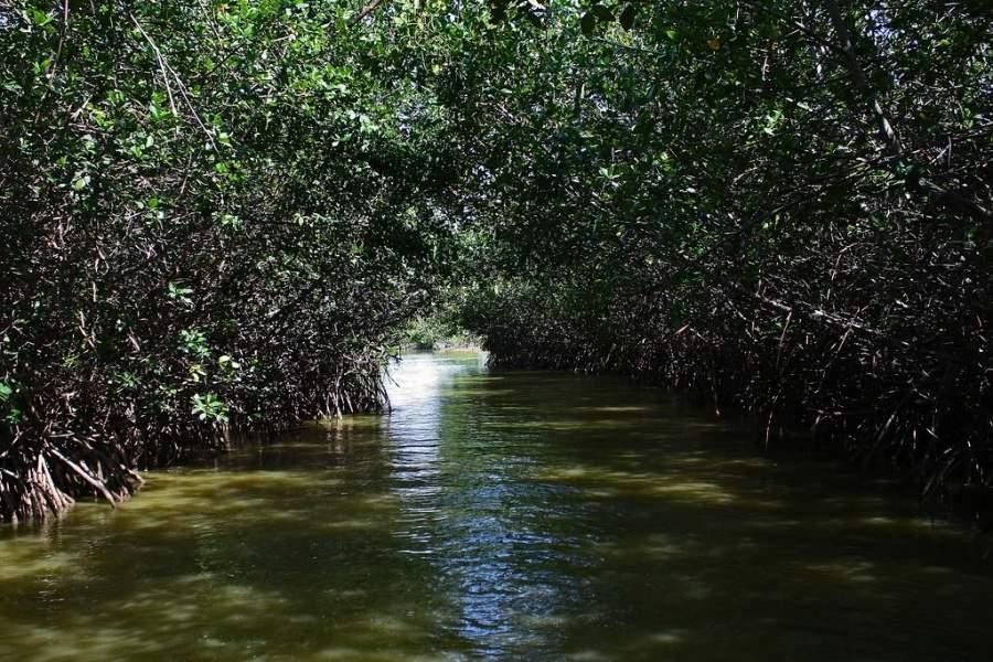 La región de Tumbes tiene abundantes zonas de manglares