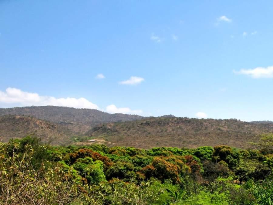 Vegetación selvática en la región de Tumbes