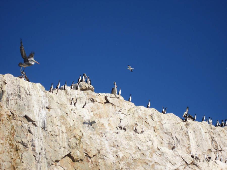 En la región de Tumbes hay una gran variedad de aves