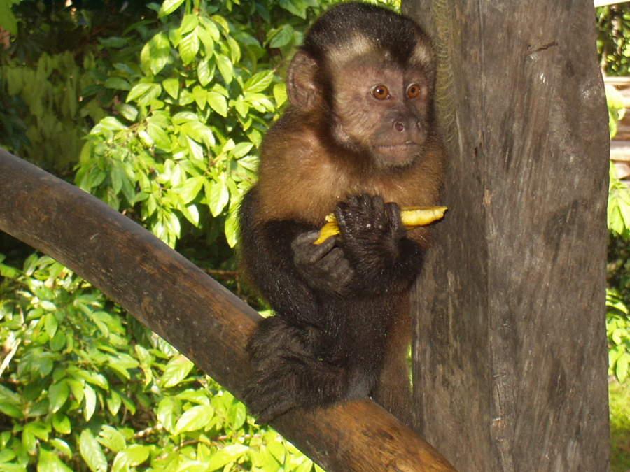Isla de los Monos en los alrededores de Iquitos