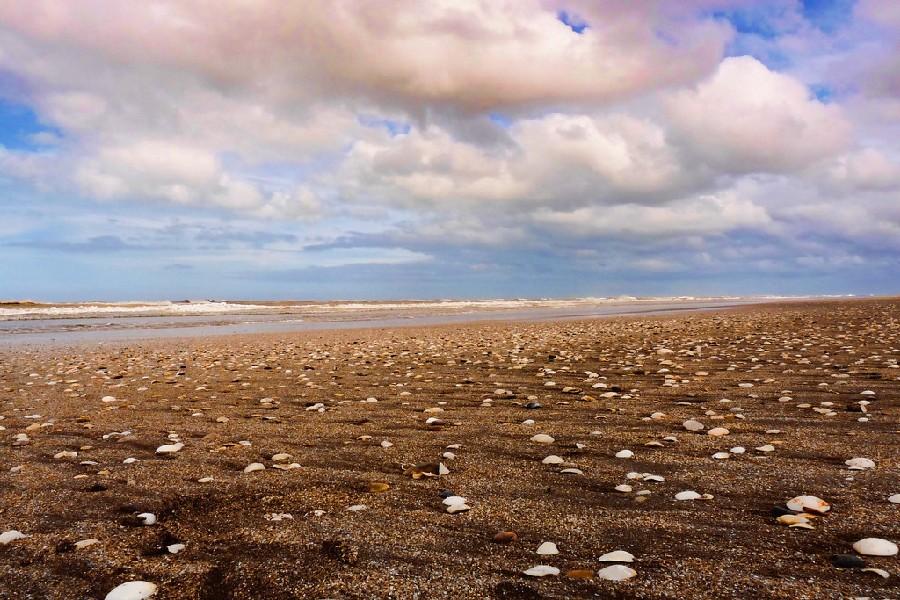 Playa con conchas en Pinamar