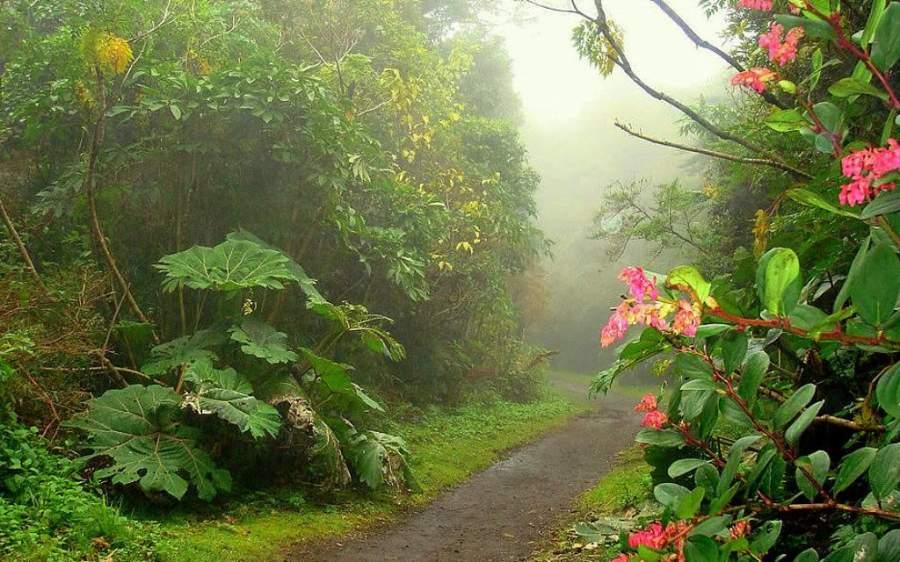 Un sendero en los alrededores de San José de la Montaña