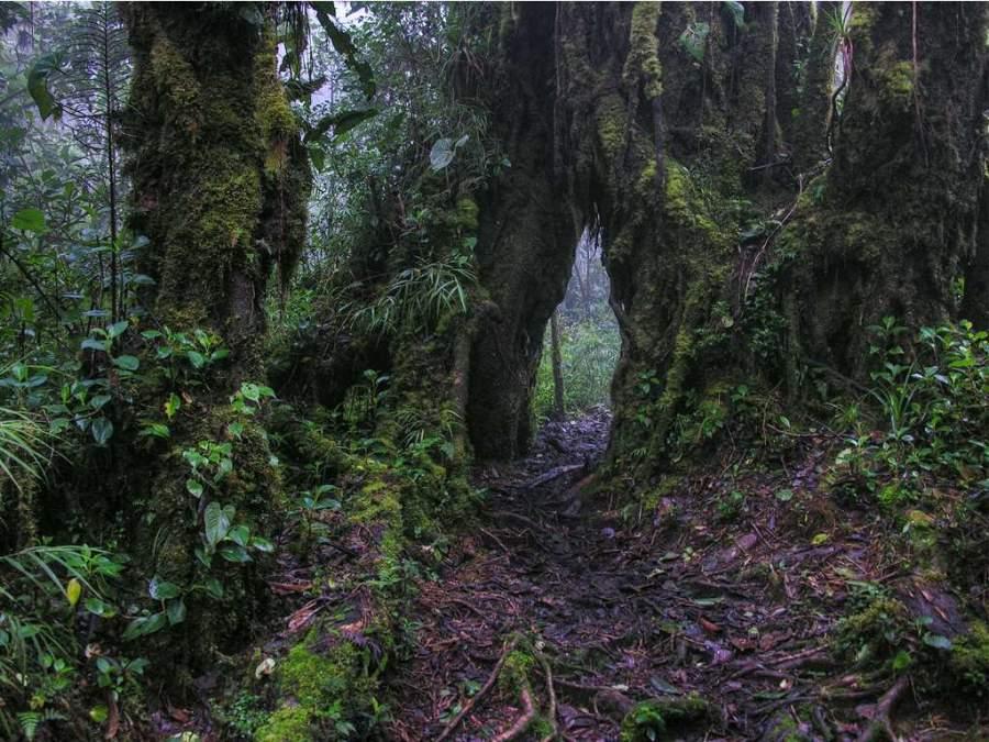 El Parque Nacional Braulio Carrillo es conocido como el Pulmón de San José