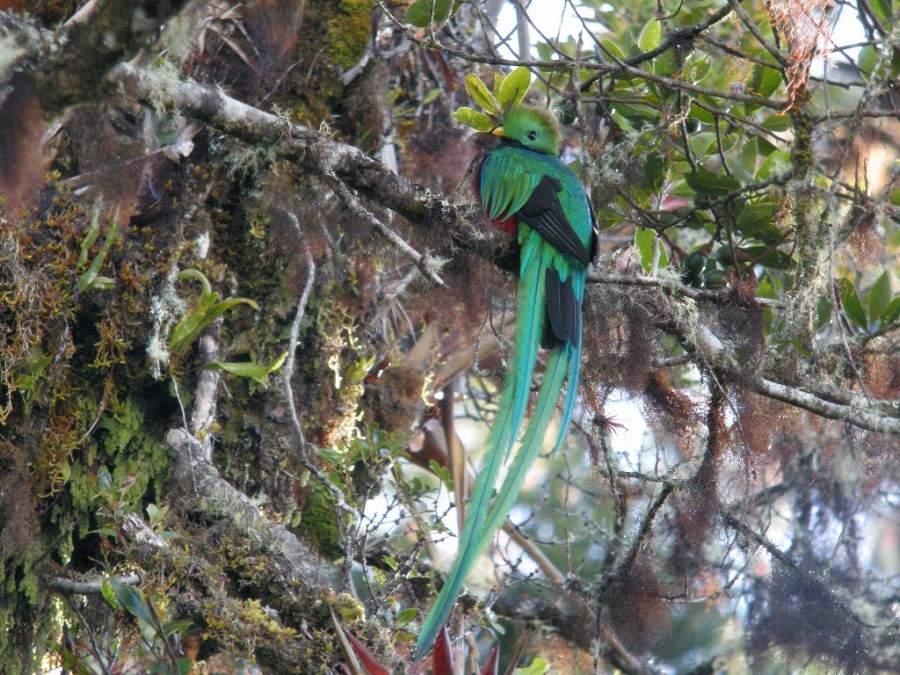 En el Parque Nacional Braulio Carrillo viven 515 especies de aves
