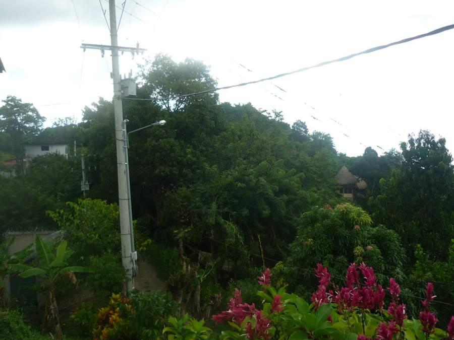 La abundante vegetación es uno de los rasgos más sobresalientes de Minca