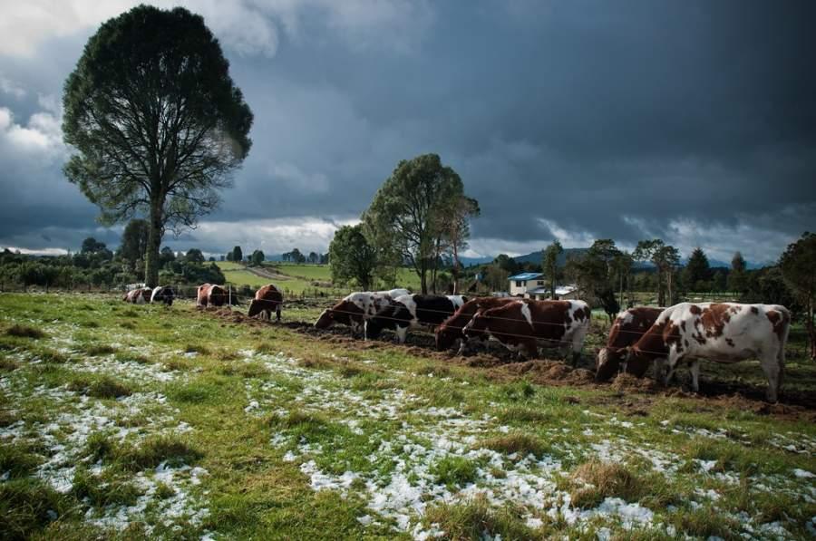 Paisaje de los campos en Osorno