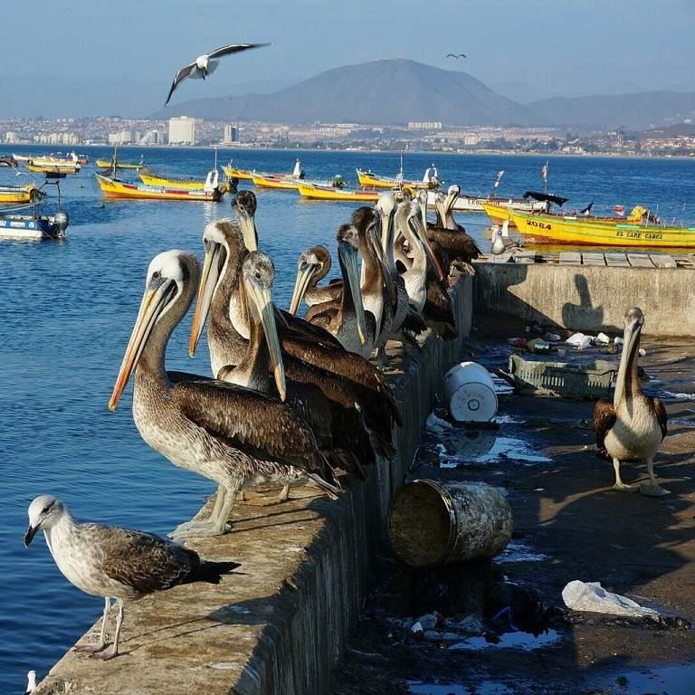 Visita el puerto de Coquimbo