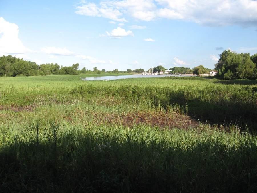 Zona pantanosa junto al río Paraná en San Pedro
