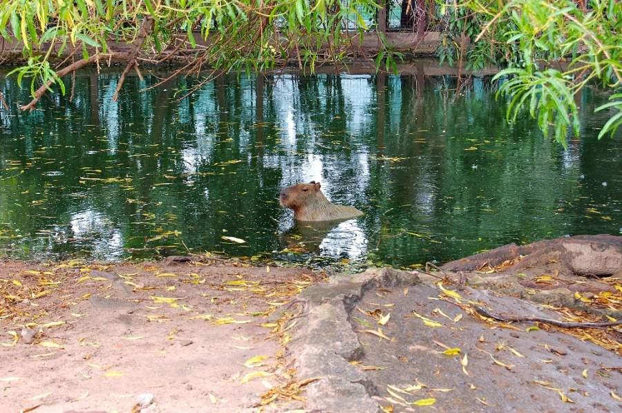 El zoológico de Santa Cruz de la Sierra resguarda especies nativas de Sudamérica