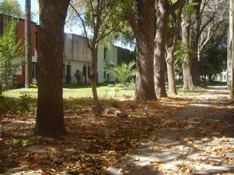 Área peatonal llena de árboles en el barrio 12 de Septiembre en Cipolletti