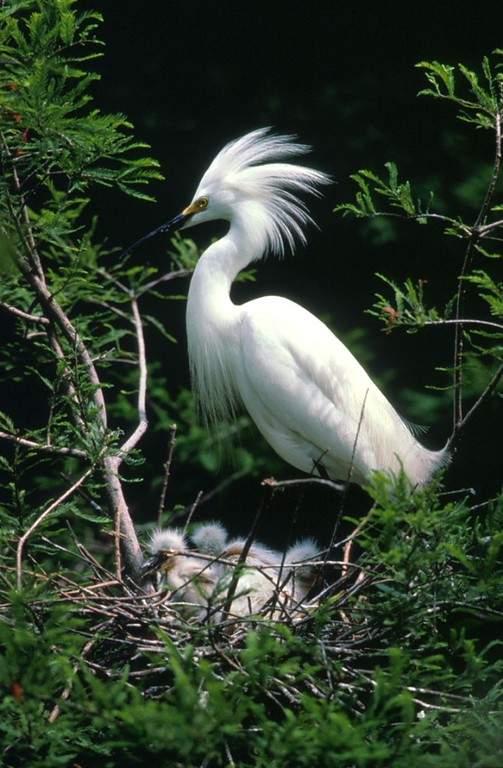 Visita el Parque del Pantanal en Corumbá