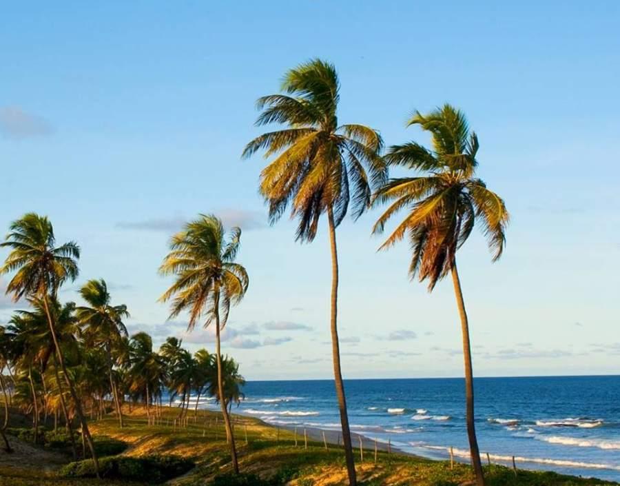 Palmeras en una playa de Costa do Sauípe