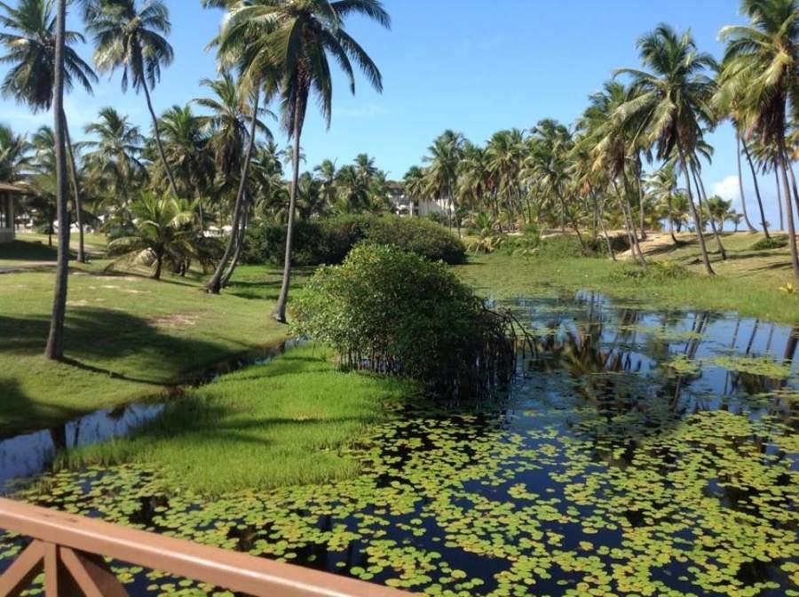 Costa do Sauípe está rodeada de abundante vegetación