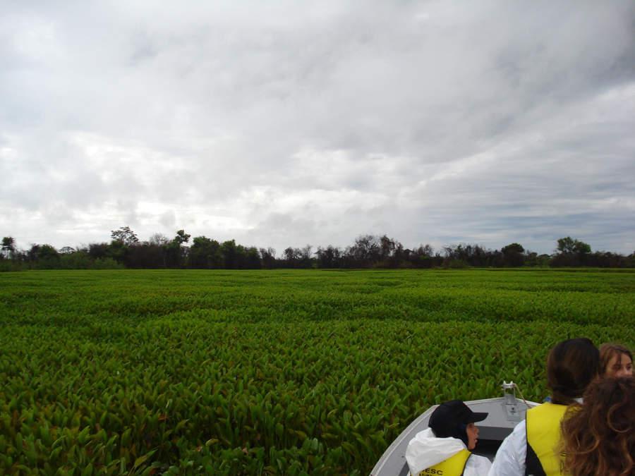 Poconé es un punto de partida para explorar la región de Pantanal