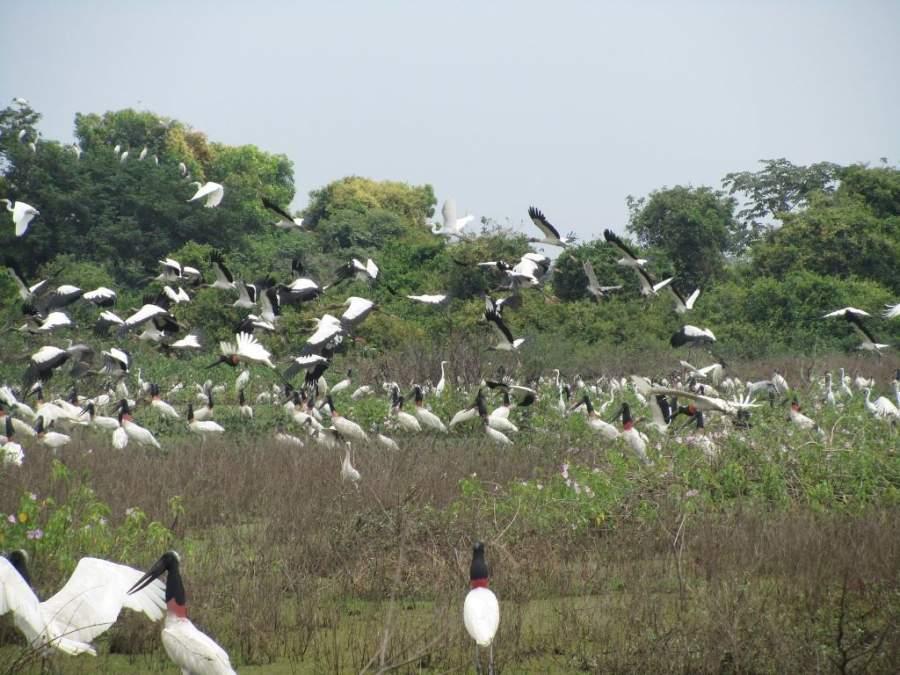 En Poconé puedes explorar Pantanal y observar la variedad de flora y fauna