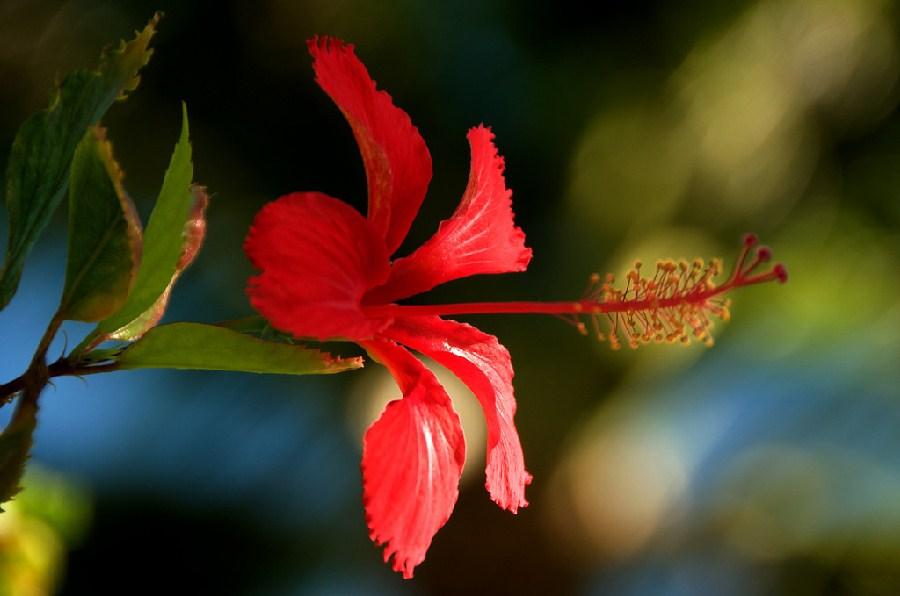 Colorida flor en Punta Cana