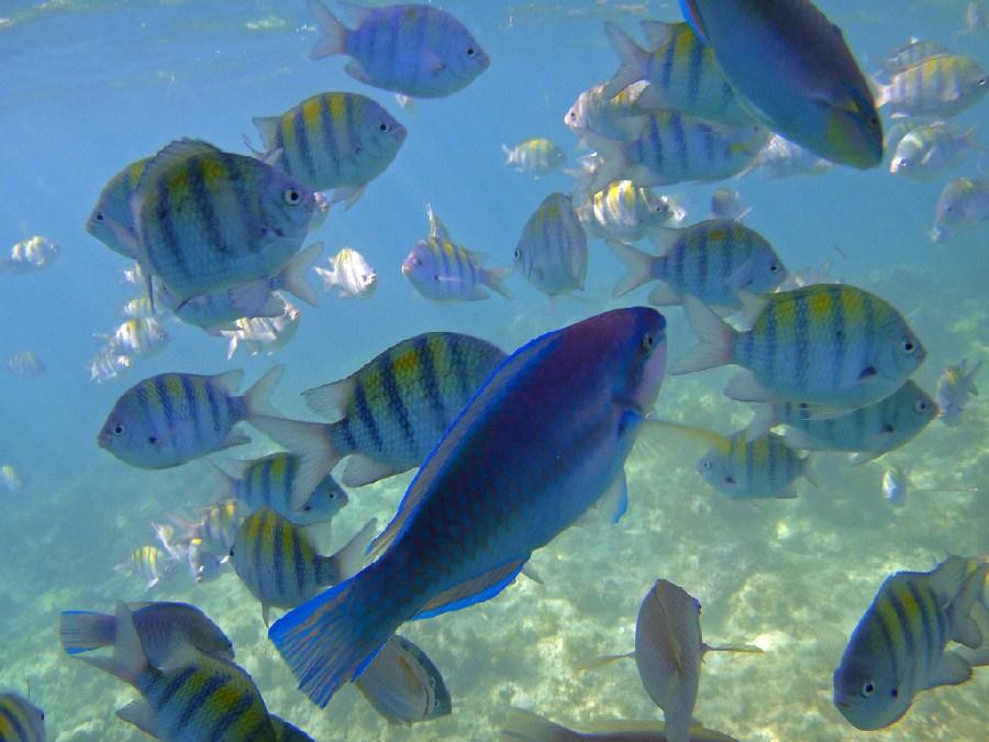 Vida marina de Punta Cana