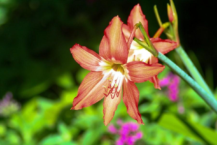 Coloridas flores en Negril