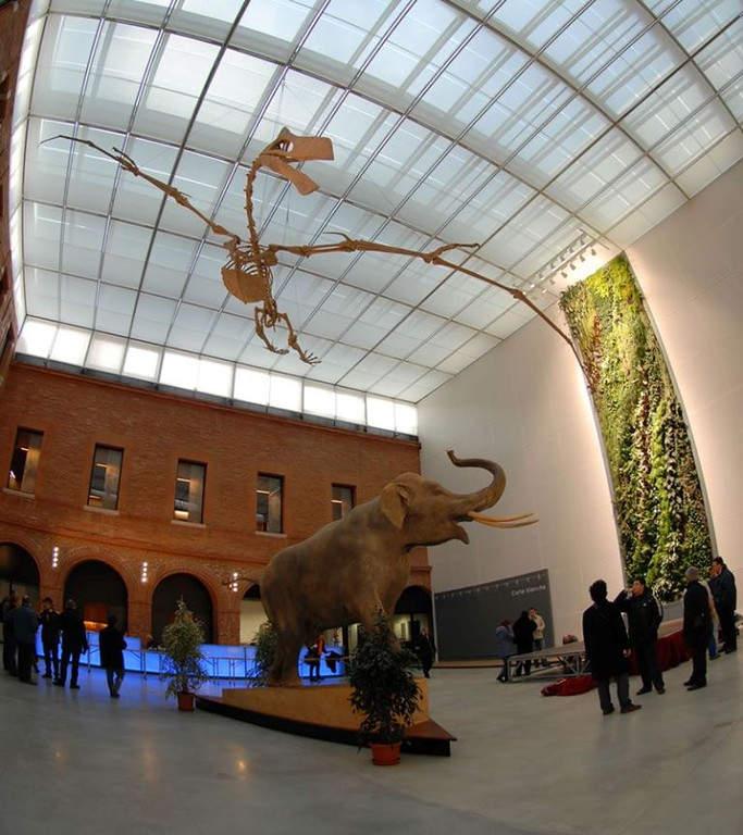 Interior del Museo de Historia Natural en Toulouse