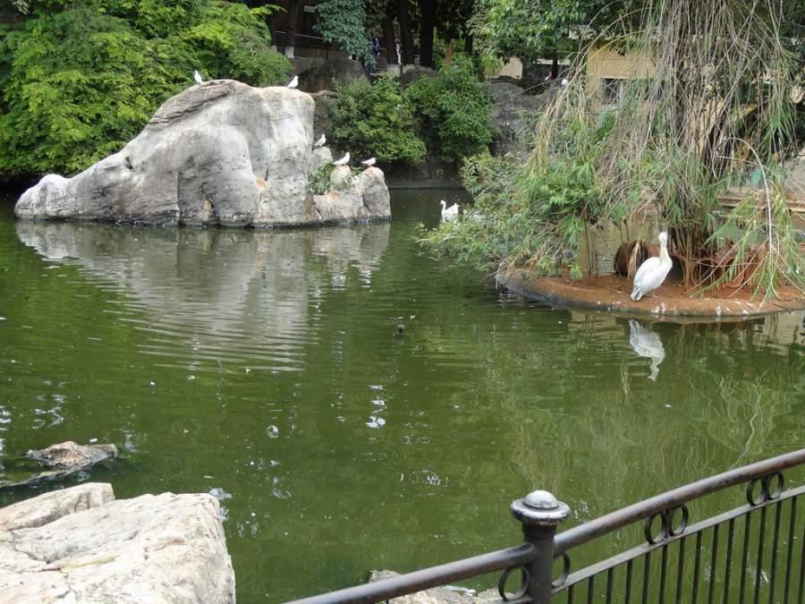 Estanque en el zoológico de Kunming