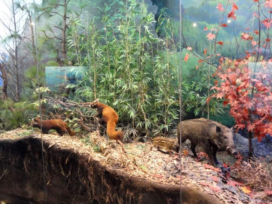 Museo de Historia Natural de Zoología en Kunming