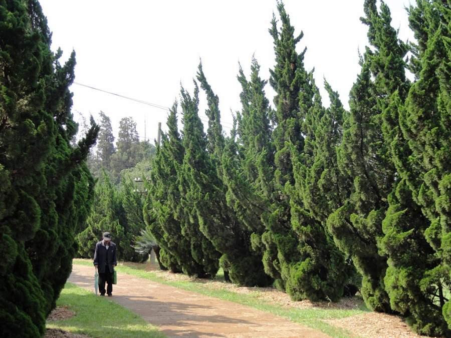Jardín Botánico de Kunming